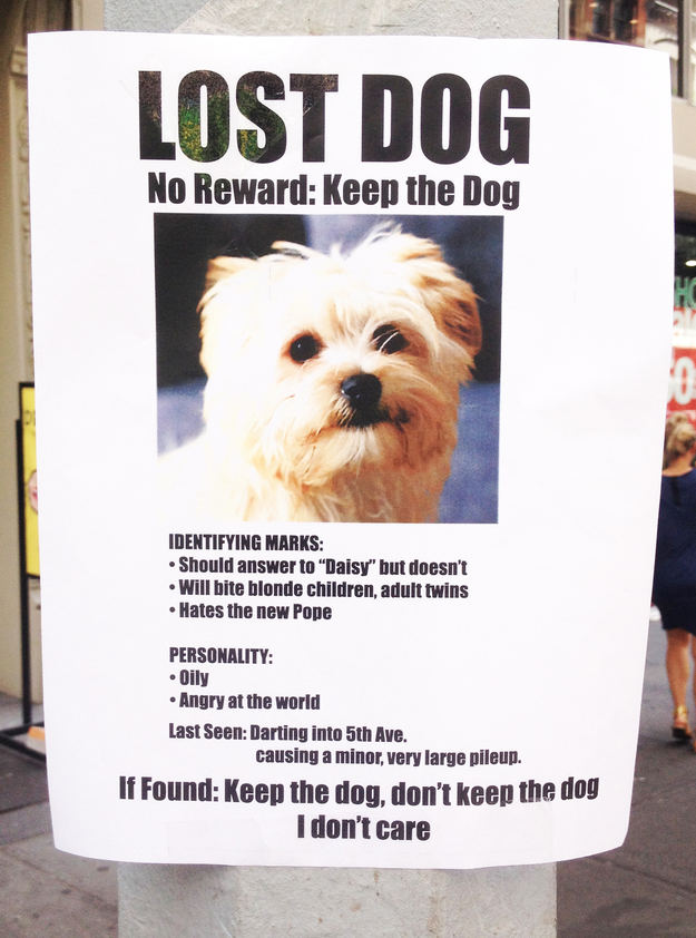 Funny Dog Pictures | Hilarious Lost Dog Signs | Sidewalk Dog