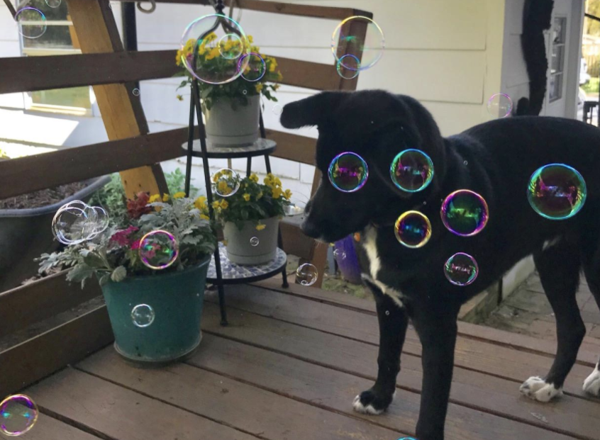 dog with bubbles