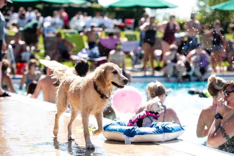 dog at Home for Life pool party