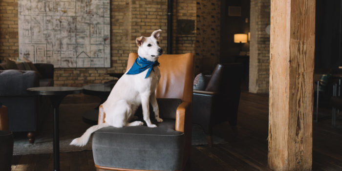 dog in hotel room for dog-friendly hotels article