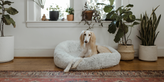 White dog laying in a bed next to some plants by a window | Create a dog gallery wall