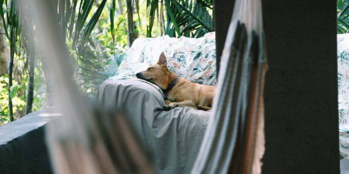 Dog relaxing in bed in a lush tropical setting